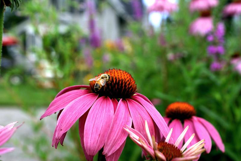 Flower forager: