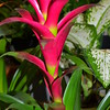 "July 13, 2014<br /> <br /> ""BROMELIAD""<br /> <br /> Home Depot Garden Center<br /> Vicksburg, MS"