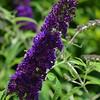 June 6, 2015<br /> <br /> Delores's Garden<br /> Lake Village, AR
