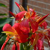 "June 30, 2015<br /> <br /> ""IRIS and BUDS""<br /> <br /> Public Library (our city)"