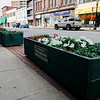 Flowers boxes rest on the sidewalks of Main Street in Fitchburg on Wednesday afternoon. The flower boxes will be placed on Main Street overnight to help divide the one-lane traffic and a bike lane. SENTINEL & ENTERPRISE / Ashley Green