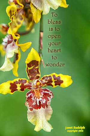Flowerheart Production Cards