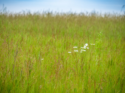 6.19.2019 In the prairie#project365 #lptr#LaphamPeakStatePark #WIDNR #DiscoverWisconsin #AWealthofNature