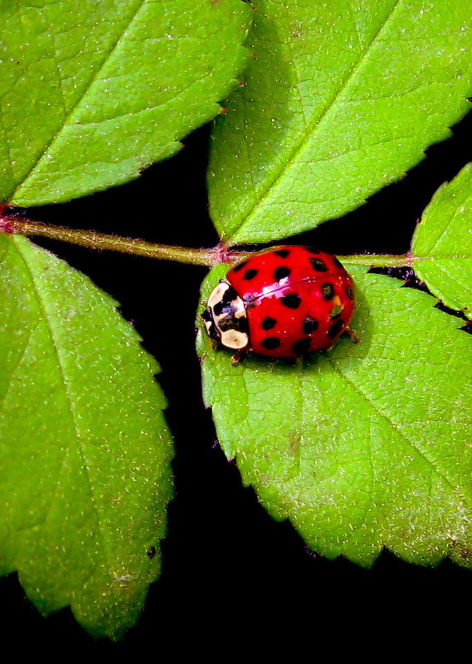 "This photo was taken by Cindy Lyons during our ""Ladybug"" vacation."