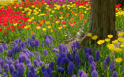 Beautiful Spring Garden