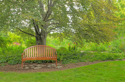 Bench Under A Nice Shade tree