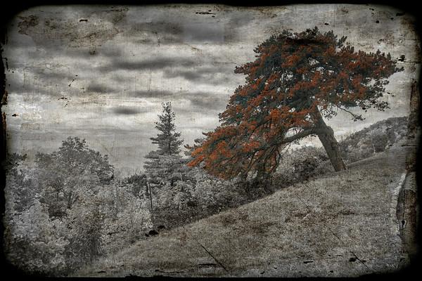 Flowers & Trees