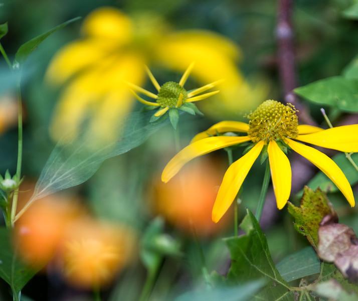 Flowers.0217.jpg