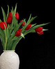 #F144  Red Tulips in White Vase