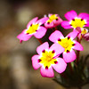 small grouping of flowers