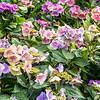 Beautiful flowers outside a Martinshöhe home