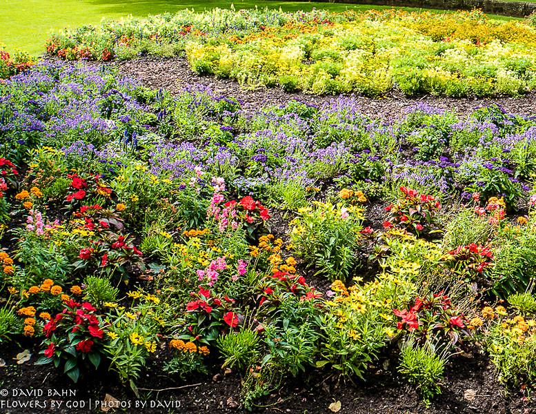 Beautiful flowers at the Gartenschau in Kaiserslautern