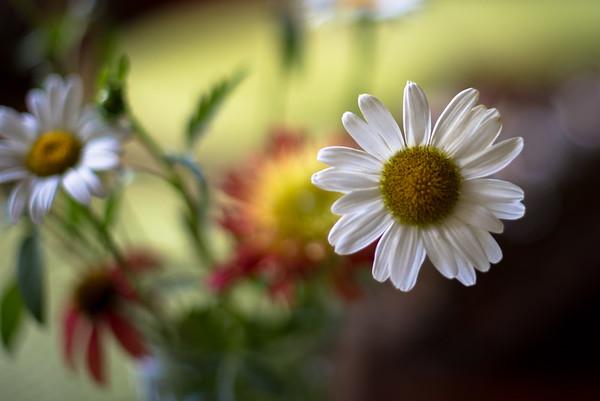 flowers 7/2015
