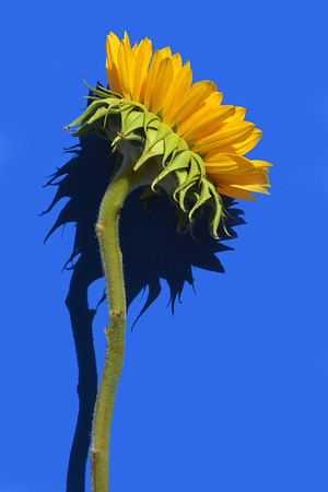 One Sun Sunning