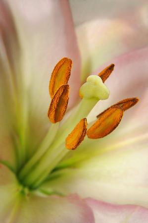 Blooming Detail