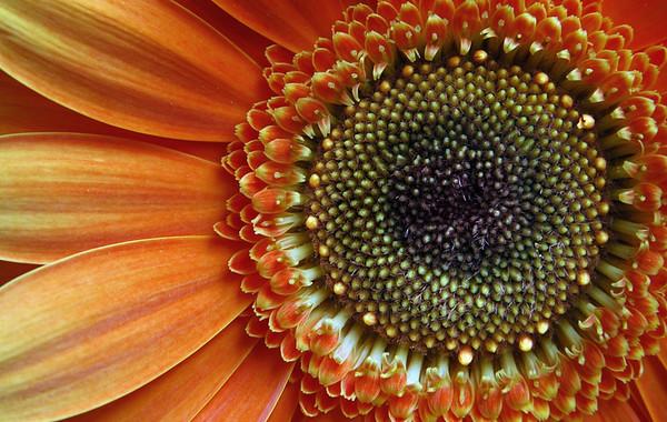 Up Close And Orange