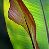 Two Leaf Tango
