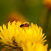 Bug sitting on a paper daisy