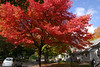 Fall 2007, Plymouth, Michigan.