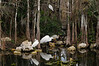 Ibis and Egrets in Big Cypress National Preserve, Florida  Copyright - W. Keith Baum | PhotoCanal.com
