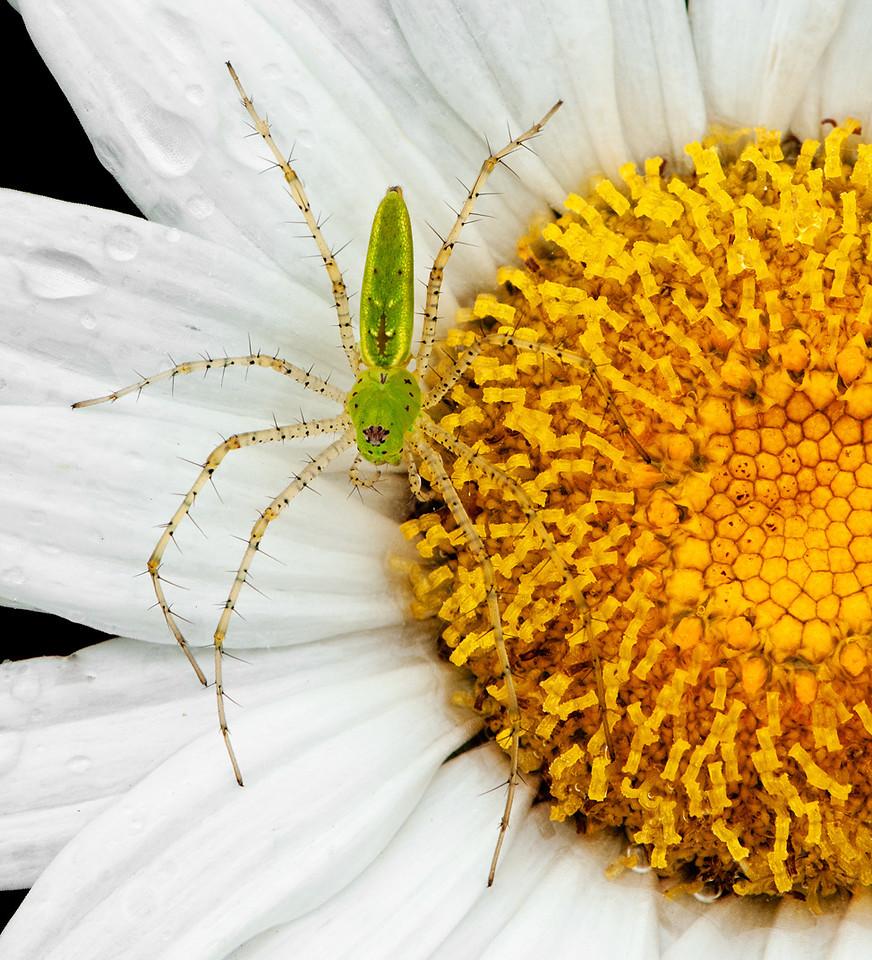 Spider Redux