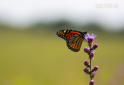 Flowers, Butterflies, and Bees