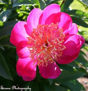 Flowers (Fiori)