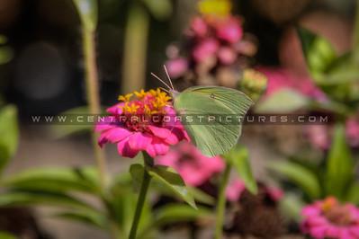 flower green butterfly fav 2028