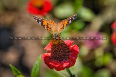 flower butterfly 1974