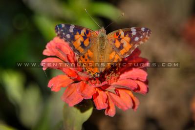 flower butterfly fav 2050
