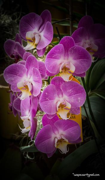 Flowers, Flores, Blumen