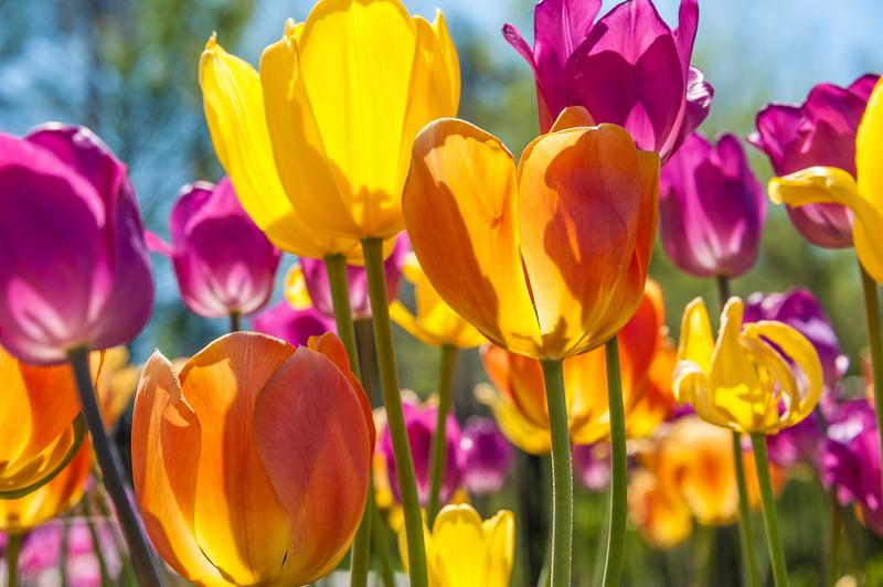 Joy of Spring.