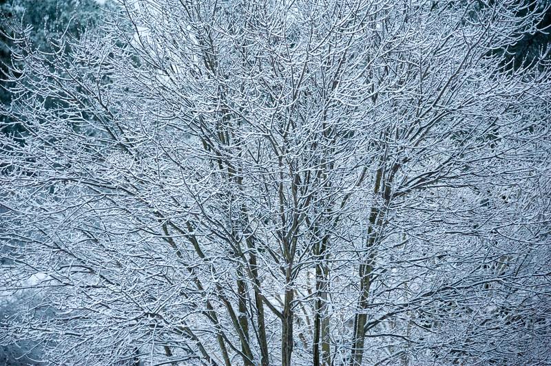 White Winter Coat.