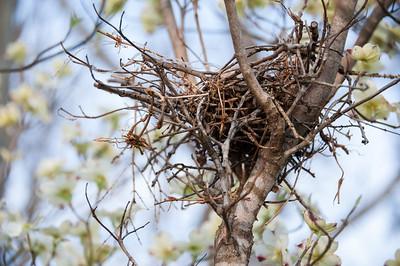 The Nest.