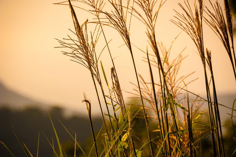 Sunset Stalks.