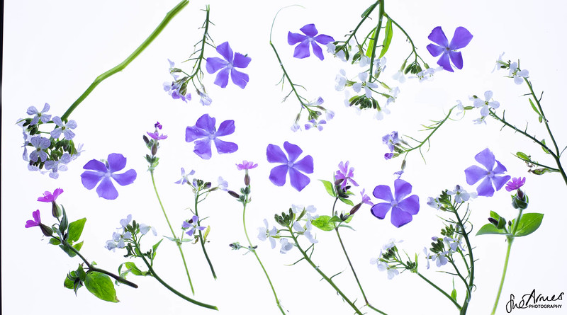 Spring Flower Scatter