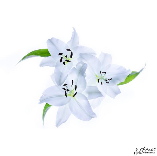 3 Lilies