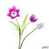 Bright Tulips 1