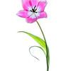 Bright Tulip 4