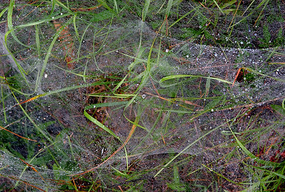 Misty Web - Michigan