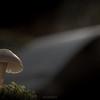 Fungi World