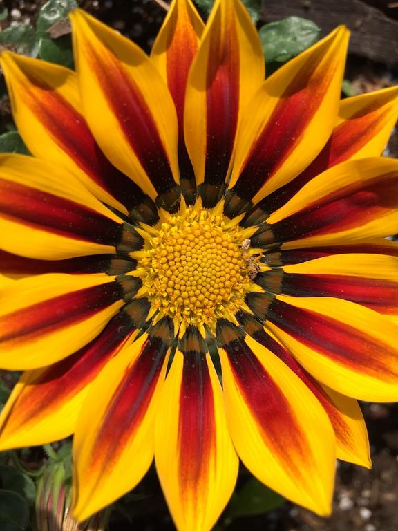 flower 2015