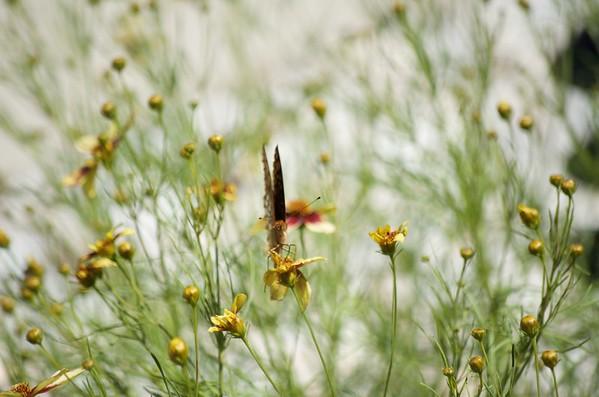 Flowers butterflies garden
