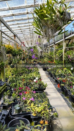 Landscaping Gardening Flowers 081819 TracySaundersArt yes (24)