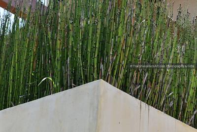 Landscaping Gardening Flowers 081819 TracySaundersArt yes (3)