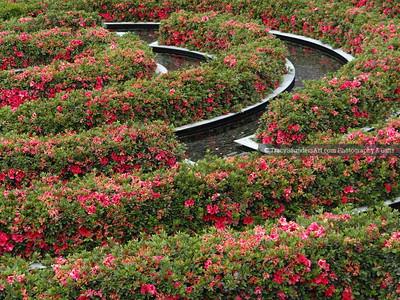 Landscaping Gardening Flowers 081819 TracySaundersArt yes (22)