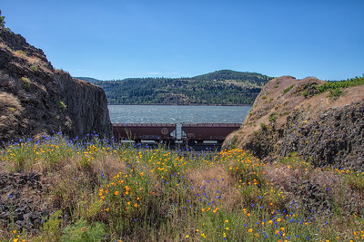 Cornflowers and Poppies Train Columbia River 5-18-18