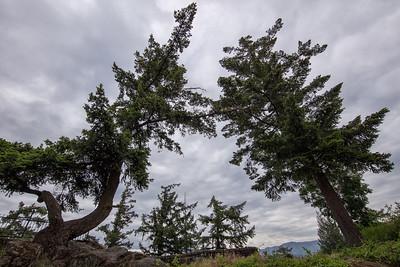 Windswept Trees Columbia Gorge Hotel 5-19-18