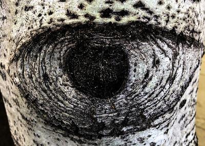 Aspen Tree Trunk Eye - Landscape Orientation