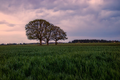3 Oaks Sunset McMinnville Oregon Spring Stormy Evening